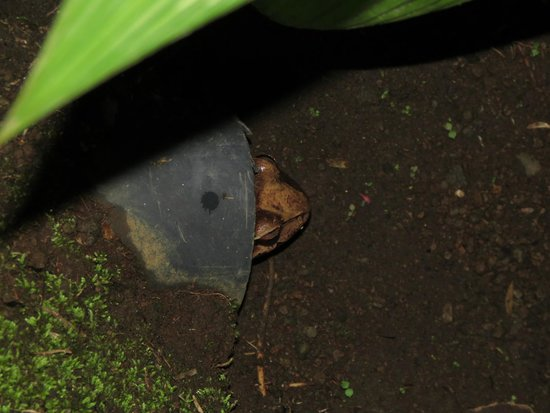 Casa Luna Hotel & Spa: lots of frogs
