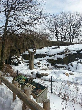 Bronx Zoo : Bear enclosure