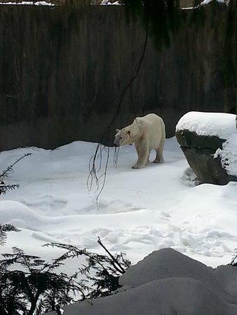 Bronx Zoo : Polar bear enclosure