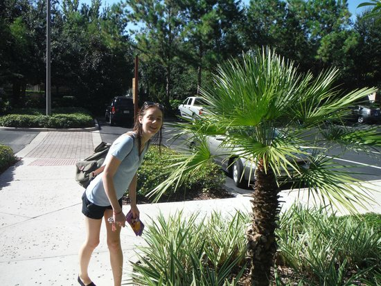 Hilton Grand Vacations at Tuscany Village: Palm Trees!