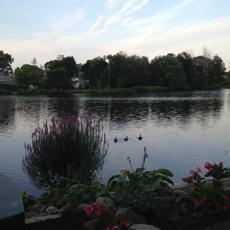 Walden on the Pond : The pond