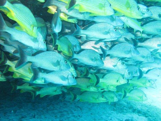 Phantom Divers : Reef Dive