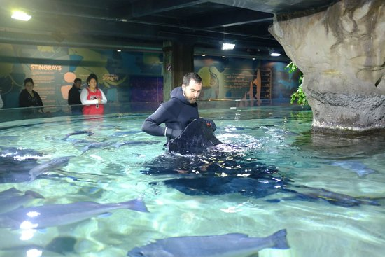 Kelly Tarlton's Sea Life Aquarium: Stingray feeding