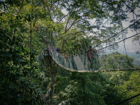 FRIM -Forest Research Institute of Malaysia: The suspension walkway