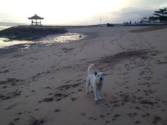 Sindhu Beach: わんこさんと遠巻きに戯れ・・・