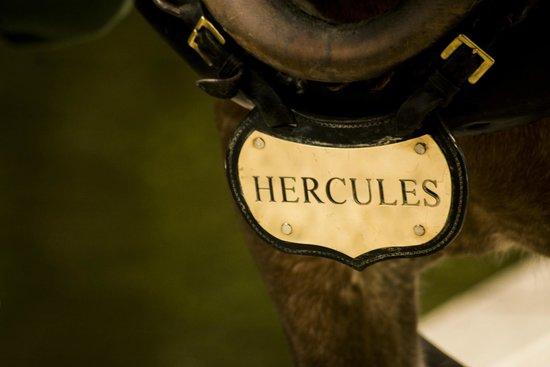 Llangollen Wharf Boat Trips: Hercules