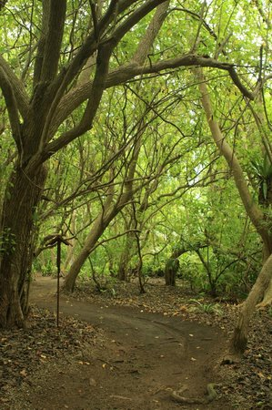 Shangri-La's Villingili Resort and Spa Maldives: so many trees you cant walk inbetween them