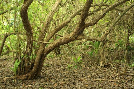 Shangri-La's Villingili Resort and Spa Maldives: Nature Trail