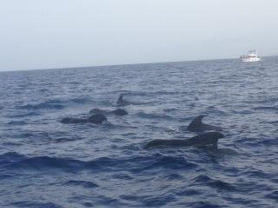 Las Piramides: Pilot Whale watching. AMAZING!