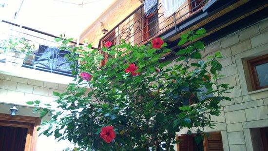Barbara Studios: Le jardin