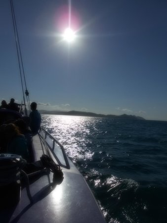 Cruise Whitsundays: After a visit from the whales!