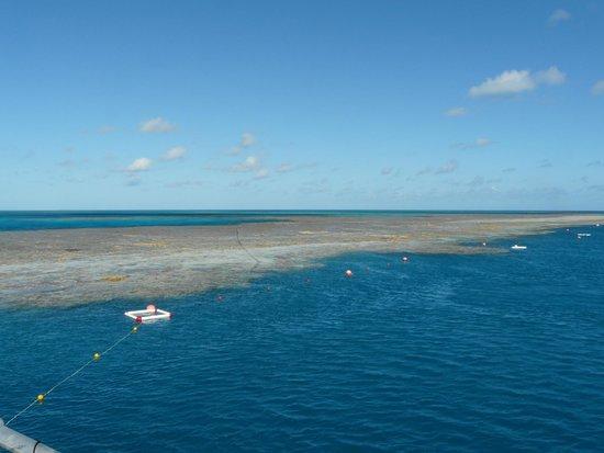 Cruise Whitsundays - Day Cruises : Few fish and grey coral