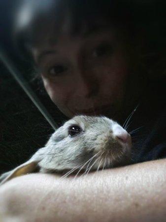 Agriturismo Predas Rujas: coniglietti da coccolare!