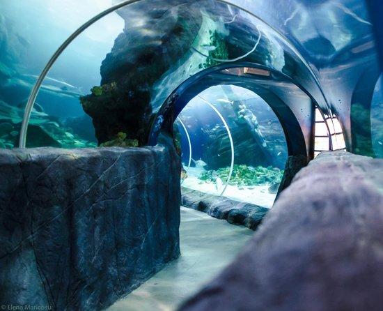 SEA LIFE Oberhausen: Tunnel