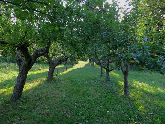 Chateau de Roussan : Manzanos jardín