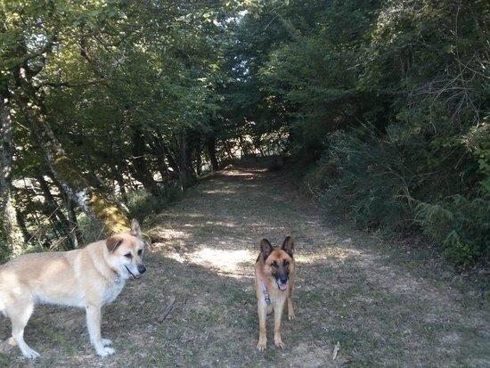 Borgo Belvederi : giretto nel bosco con le ragazze