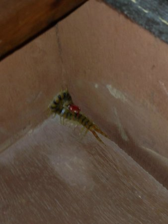 The Kikar Lodge : Good 4 inch insect in the bed side drawer