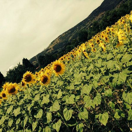 Casa Portagioia: The stunning sunflower fields