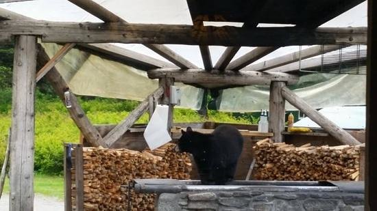 Taku Glacier Lodge & Wings Airways: Bear visits the grill