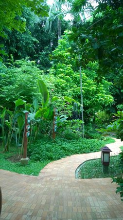 Paradise Beach Resort: Garden