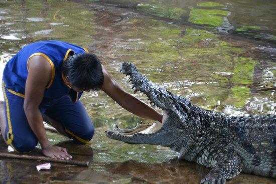 Samui Crocodile Farm: Gnam Gnam