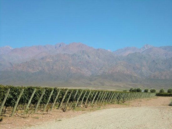 Ampora Wine Tours: In the foothills of the Andes
