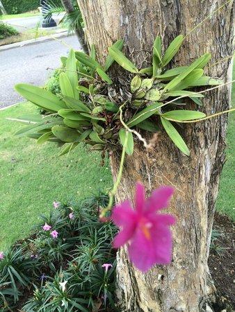 Sandals Ochi Beach Resort : Landscape