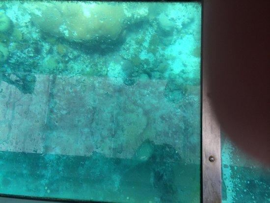 Sandals Ochi Beach Resort: View in glass bottom boat