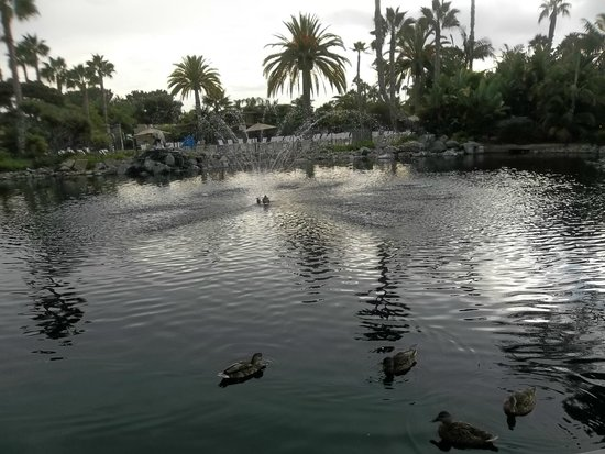 Paradise Point Resort & Spa: duck pond