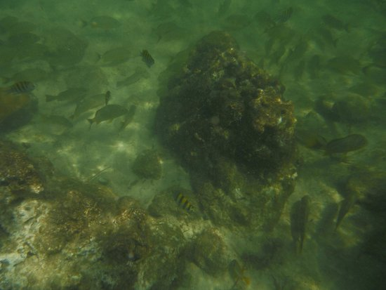 Bahia Honda State Park and Beach: Fish
