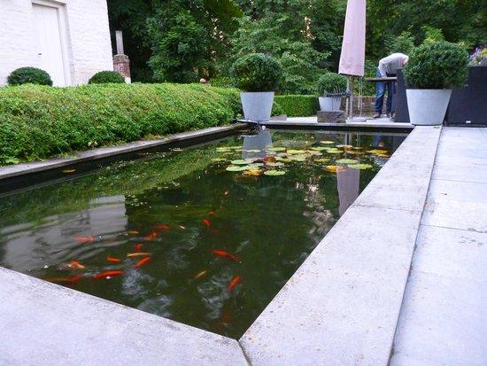 Bed & Breakfast Speelmansrei: The lovely pond.
