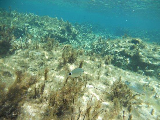 Plage d'Elafonissi : Elafonissi en plein mois d'aout! - Snorkeling