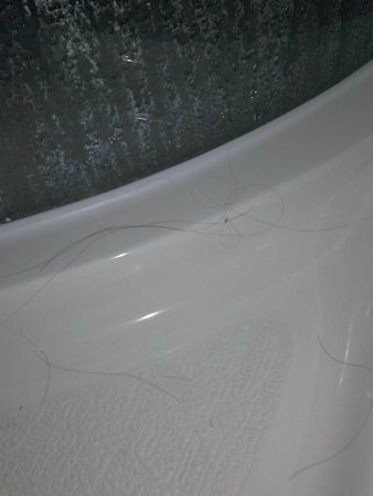 Discovery Accomodation : Someones hair in the shower...