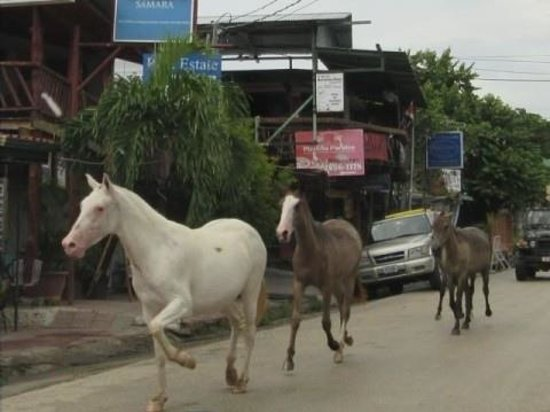 Tabanuco: Horses in Samara