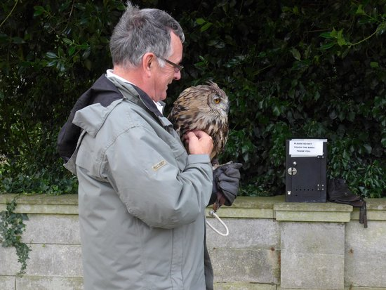 Warner Leisure Hotels Thoresby Hall Hotel: Thor the Eagle Owl