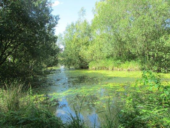 Caalm Camp: Secret lake near the yurt site