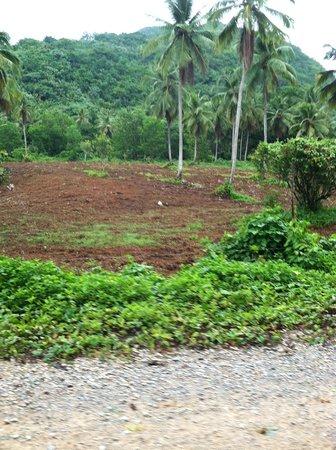 Playa el Valle : Farms along the road to El Valle
