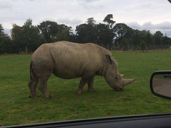 Blair Drummond Safari and Adventure Park: Rhino