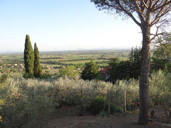 Agriturismo La Maesta: Dall'agriturismo