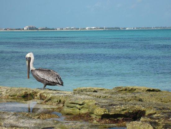 Le Vele Resort: Pelican Beach in Leeward