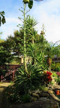 Hotel & Spa Poco a Poco : gardens