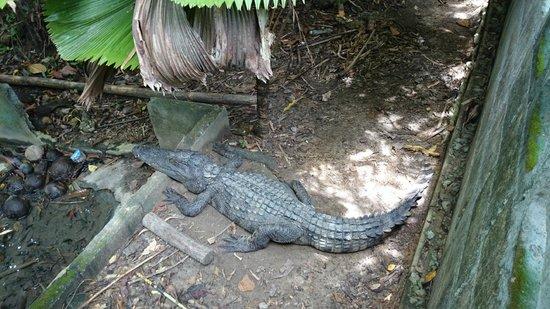 Mr. Croc - Picture of Catfish Farm, Ao Nang - TripAdvisor