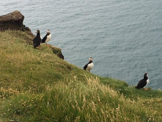 Iceland Guided Tours: We even got to see Puffins!