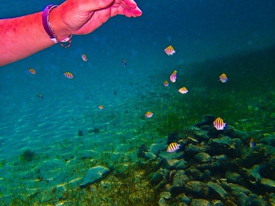 Allegro Cozumel: Snorkeling is great