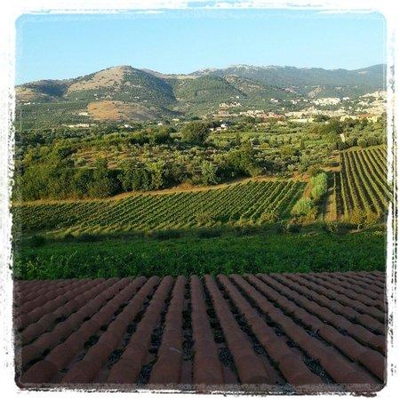 Agriturismo Villa Clementina: Camera con vista