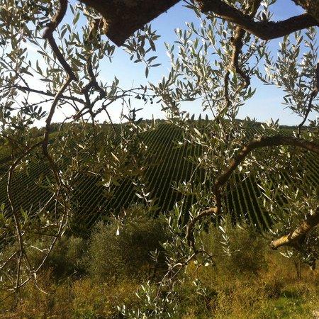 Querceto di Castellina : Vista dal querceto