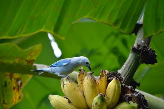 Arenal Springs Resort and Spa: Beautiful birds on the property