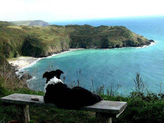 Hideaway Huts at Treworgey: Our old Collie, Meg, at nearby Lantic Bay