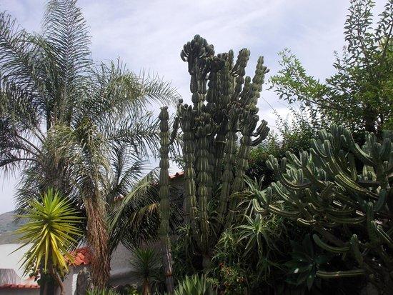 Park Hotel Terme Mediterraneo: giardino