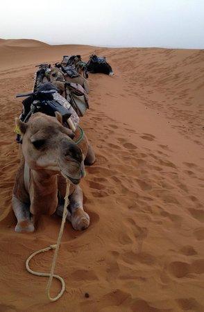 Best Of Merzouga - Day Tour: i cammelli